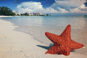 A starfish sits on a beach in the Bahamas