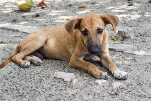 Mexican stray dog
