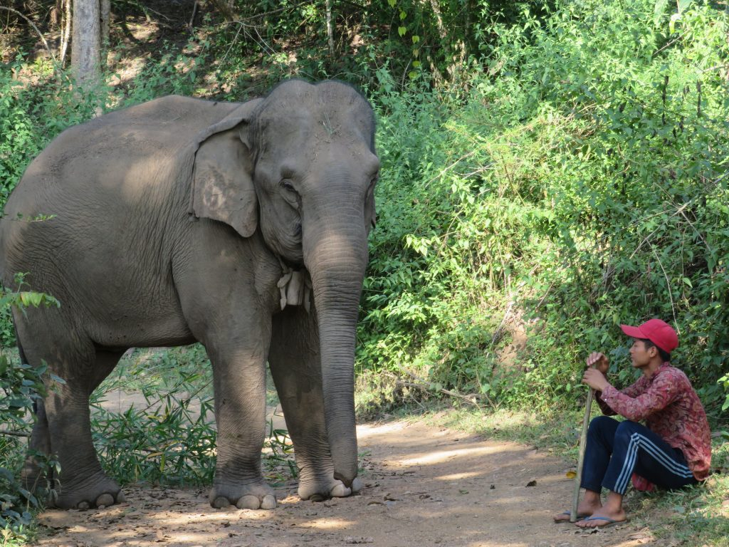 Elephant encounter with Thai local