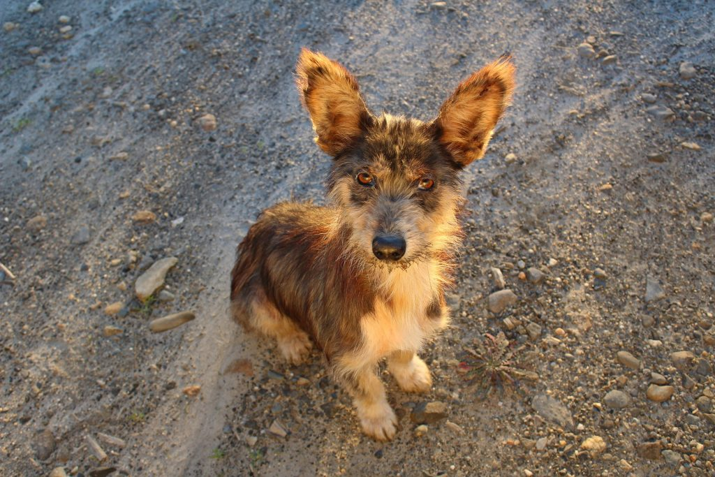 SStray Puppy up for adoption in Mexico