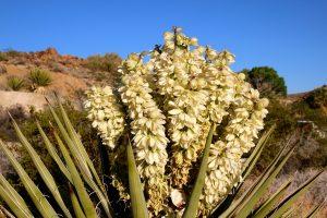 California desert - joshua-tree-