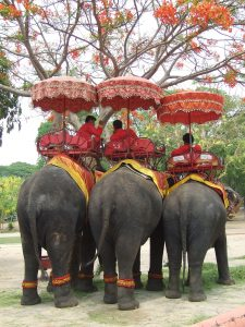 elephant-riding in thailand