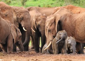 elephants at wateringhole in Africa