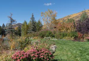 Foliage in Vail, Colorado