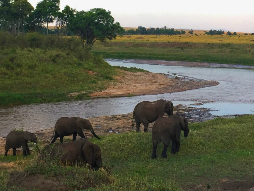 Elephant Cam. Photo: Terri Marshall