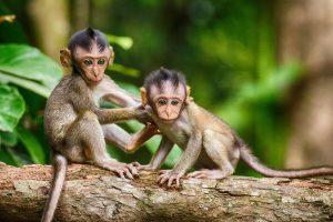 monkey-in tree