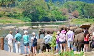 tourists-looking at elephants