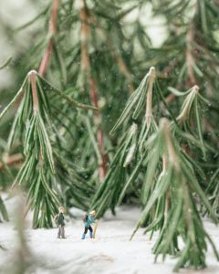 Rosemary Forest photo by Erin Sullivan
