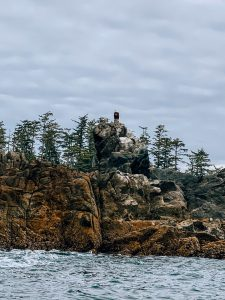 Bald eagle in Ucluelet, BC. Photo: Kellie Paxian