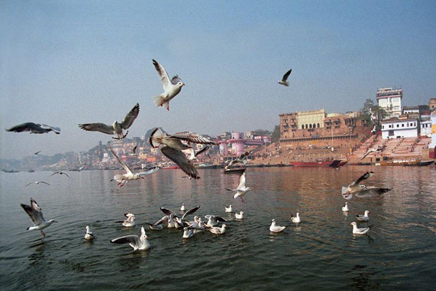 Seagulls are yearly visitors at the start of winter. Photo: Sugato Mukherjee