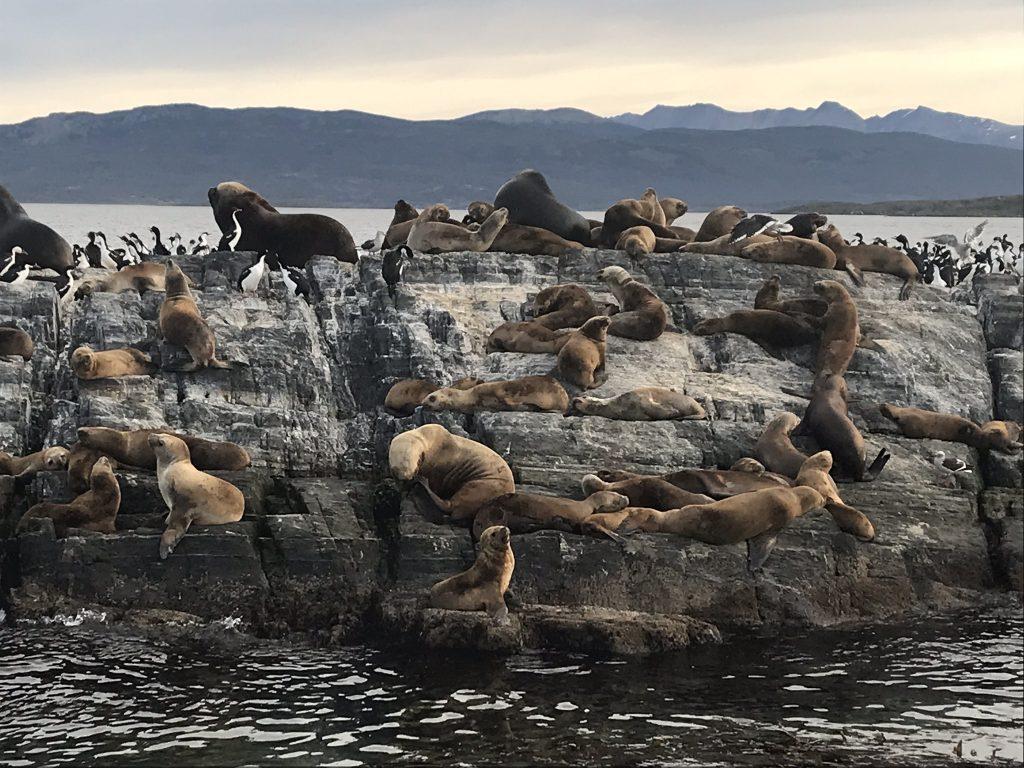 Sea Lion Island in the Beagle Channel, Ushuaia. Photo: Devon Older