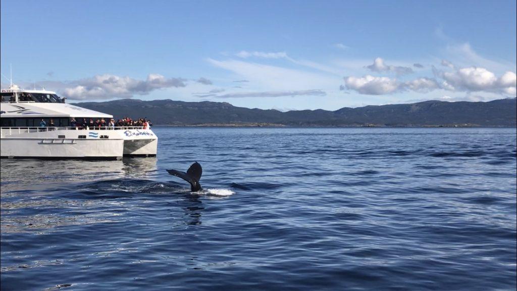 Humpback whale spotting in the Beagle Channel, Ushuaia. Photo: Devon Older