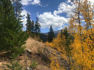Fall Aspens. Photo by Kerri Smith