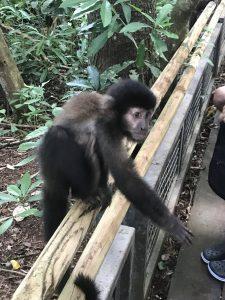 Monkey Photo: Devon Older