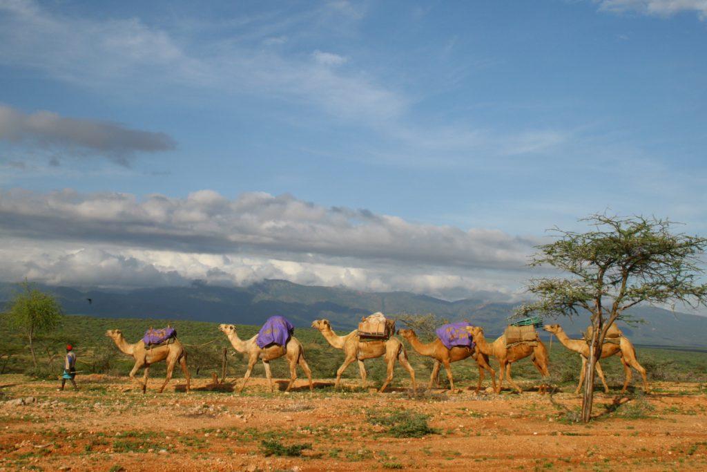 Camel Trek photo by Andy Barker