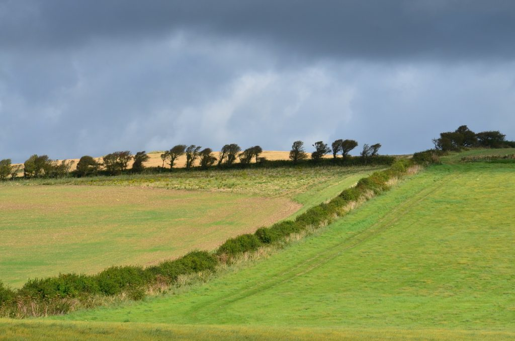 isle-of-wight-grazing land