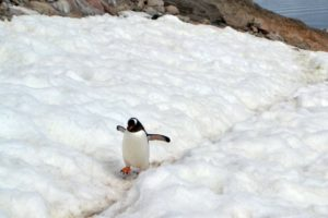 Love Letter to Antarctica. Photo by Terri Marshall