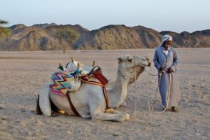 camel-with-bedouin