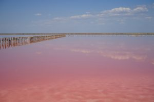 Mirror of Pink Lake. Photo: Alona Tiunina