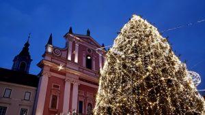 Largest public tree in Ljubljana, Slovenia. Photo: Tonya Fitzpatrick