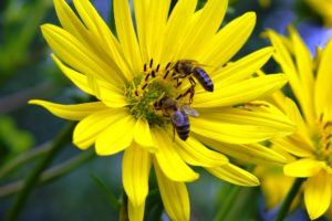 bees-ecotourism