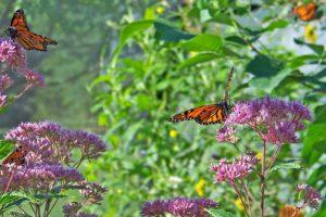 butterflies-transformative