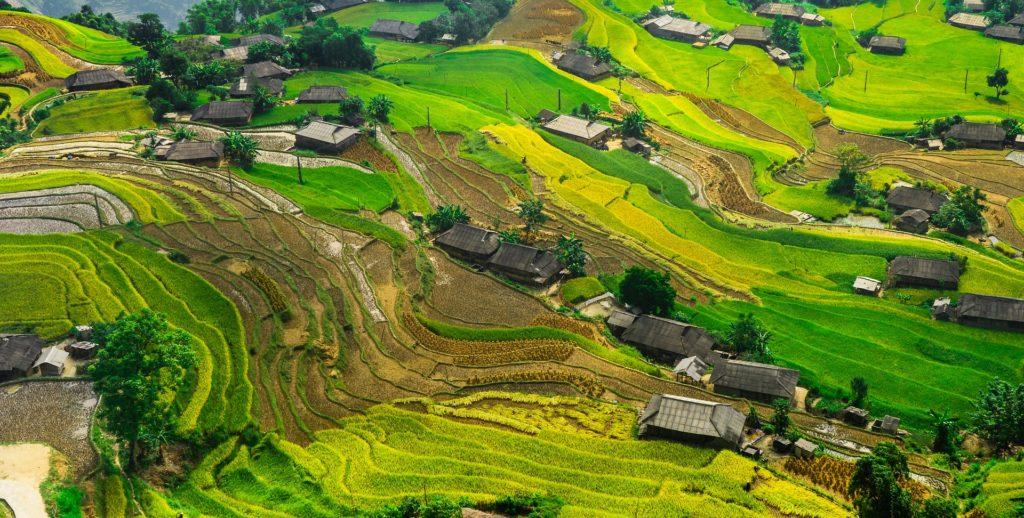 kampung houses around Malaysian rice paddies