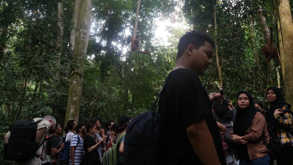 A crowd of tourists on an orangutan viewing trek during high season. Image by Nayla Azmi.