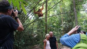 Tourists take selfies with an orangutan. Image by Nayla Azmi.