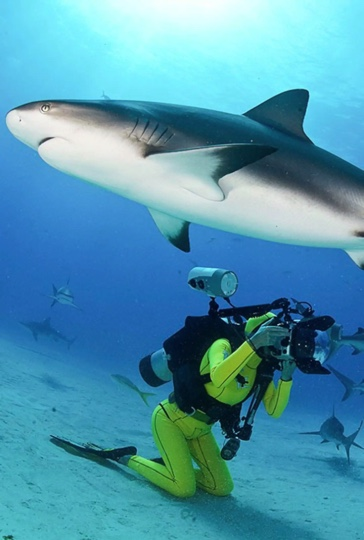 """Photo_ From virtual """"Dive Under the Sea"""" experience with proceeds supporting local conservation organization in South Africa"""