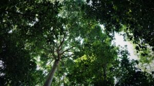 Leuser ecosystem forest