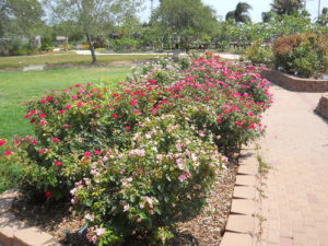 """""""South Texas Botanical Gardens (June 7)"""" by Alkula's is licensed under CC BY 2.0"""