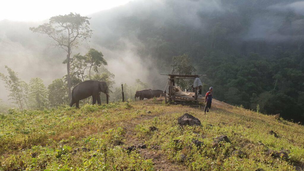Thailand-elephants