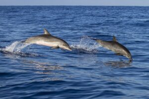 Dolphins-up-for-adoption