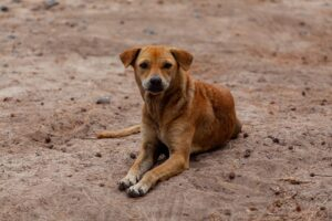 stray-dog-on-beach-may-have-rabies