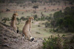 Maasai Mara. Photo: David Murphy NOTM