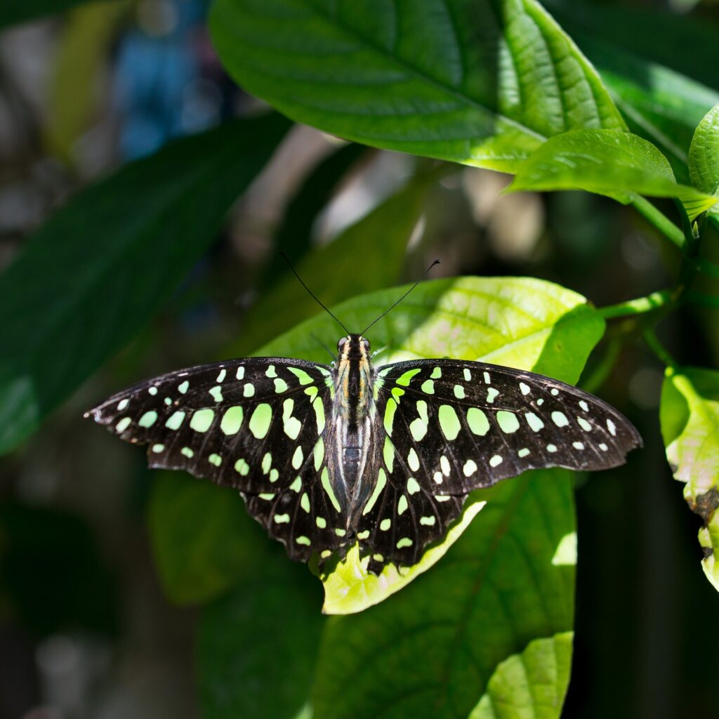 butterfly-in-Houston-Natural-Science-Museum
